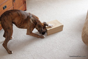 Avery investigating a shoebox