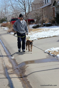 Avery and Scott practicing loose leash walking
