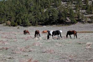 Horses at Kindness Ranch